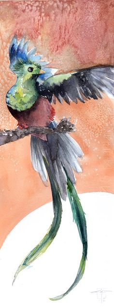 Quetzal - Acuarela sobre papel. Por Isaac Cruz. 50 x 25 cm. 2016.