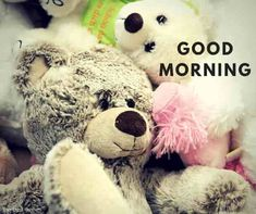 good-morning-images-for-teddy-bear Funny Good Morning Images, Good Morning Beautiful Quotes, Cute Good Morning, Good Morning Quotes, Gd Morning, Teddy Bear Images, Teddy Pictures, Good Night Teddy Bear, Good Evening Greetings