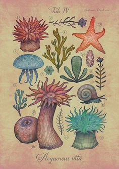 PayPal only, thank you - Aequoreus vita IV / Marine life IV - A4 art print