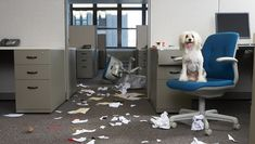 7 Ways To Make Your Office Dog Proof For Take Your Dog To Work Day - Dogtime
