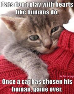 """Find great deals on Funny Cats Cute Kittens Animal Photo Fridge Magnets 2 """"x Collectibles. Buy with confidence on … Cute Kittens, Cats And Kittens, Kitty Cats, Cats Meowing, Baby Kittens, Cats Bus, Ragdoll Kittens, Tabby Cats, Cute Kitten Pics"""