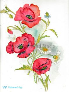 Print of original watercolor Poppies painting. Printed on fine art paper, measures x Ships in days in a sturdy document mailer. Silk Painting, Watercolour Painting, Painting & Drawing, Watercolor Poppies, Watercolor Cards, Poppies Tattoo, Botanical Illustration, Flower Art, Art Drawings