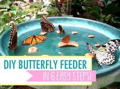 How to make a butterfly feeder in 6 easy steps. #DIY