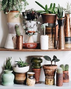 collection of pots and plants on wood shelves. Green Life, Green Day, Pot Plante, Interior Plants, Small Patio, Outdoor Plants, Wood Shelves, Home Decor Furniture, Home Decor Accessories