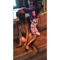 Pentru a fi sigură că are un câine perfect sănătos, o fetiță ce aspiră la profesia de medicîși folosește toate instrumentele de jucărie pentru a-i face pacientului o verificare amănunțită.…
