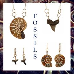 Fossilized shark teeth and ammonite jewelry by Christine Mighion Jewelry