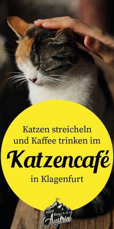 Katzencafé Cat'n'coffee in Klagenfurt - Kaffee Klagenfurt, Sailing, Coffee, Secret Places, Coffee Cafe, Drinking Coffee, Travel Inspiration, Viajes, Pictures