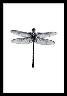 Populär poster med trollslända. Svartvit print som passar bra både ensam och i en tavelvägg. Posters och affischer med insekter, djur och trollsländor. Handla tavelramar online hos desenio.se