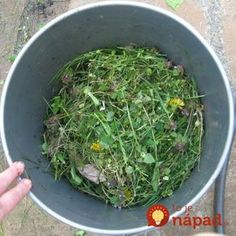 Záhradkár prezradil, prečo nikdy nevyhadzuje pokosenú trávu: Jeho dôvod sa oplatí poznať, môže pomôcť aj vám! Home And Garden, Herbs, Plants, Gardening, Country, House, Rural Area, Home, Garten