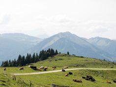 Berg, Traveling, Mountains, Nature, Sheep, Hiking, Vacation, Viajes, Naturaleza
