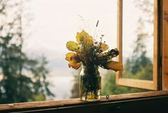 by joasia kreft Champs, Tangled 2010, Cottage In The Woods, Window View, Windows, Yellow And Brown, Love Photography, Wild Flowers, Flower Arrangements