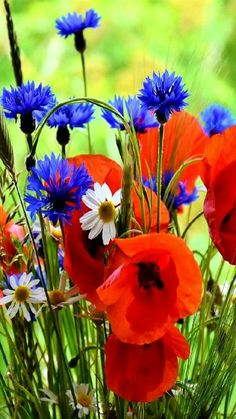 Close-up of same wildflowers, I think poppies and cornflowers combine beautifully. Blue Flowers, Wild Flowers, Beautiful Flowers, Poppy Flowers, Mosaic Flowers, Beautiful Gardens, Flowers Nature, Spring Flowers, Beautiful Nature Spring