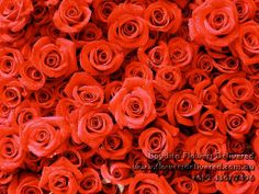 Valentine's Day Rose Color Meaning. Boydita Flowers Delivered  Central Coast Online Florist  Wallpapers