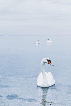 ZsaZsa Bellagio – Like No Other: white