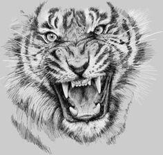 Tiger Portrait Animal Design Clear Acrylic Organizer/serving Tray by Olechka - Medium 15 x Tigergesicht Tattoo, Tigre Tattoo, New Tattoos, Tattoo Drawings, Cool Tattoos, Tiger Sketch, Tiger Drawing, Tiger Art, Tiger Design