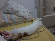 Lili la be bota , aprovecha y se duerme en mi lugar