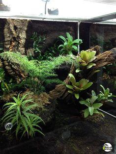Amphibians, Reptiles, Frog Tank, Cool Fish Tanks, Vivarium, Tree Frogs, Habitats, Projects To Try, Dart Frogs