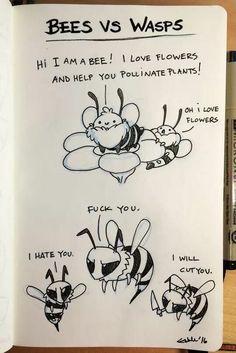 Bees vs. wasps