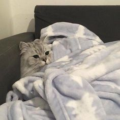 I love cute cats and kittens 'cuz they bring me happiness. Animals And Pets, Baby Animals, Funny Animals, Cute Animals, I Love Cats, Crazy Cats, Cool Cats, Pretty Cats, Beautiful Cats