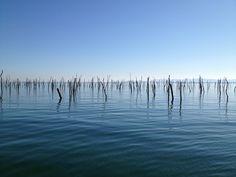 Parc a huîtres - Bassin d'Arcachon