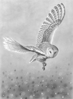 Barn Owl in Flight — Nolon Stacey eagle owls of paradise birds Owl Tattoo Drawings, Bird Drawings, Tattoo Bird, Drawing Owls, Owl Tattoos, Owl Tattoo Design, Lechuza Tattoo, Flying Owl, Owl Sketch