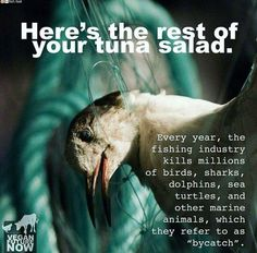 """EVRY YEAR, th fishing INDUSTRY kills MILLIONS f birds, sharks, dolphins, turtles & other marine life, referred2 as """"bycatch"""""""