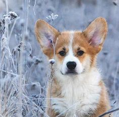 Here are some ideas for cool unique dog names for your boy! Zuko, Corgis, Darwin, Dog Names, Godzilla, Cute Art, Ranger, Unique, Top