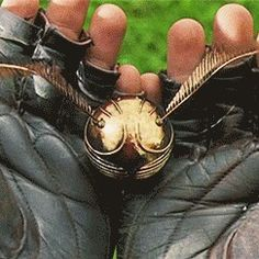 Harry Potter has caught the golden snitch!
