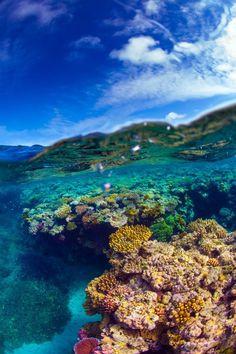 Colourful coral underneath a blue sea.