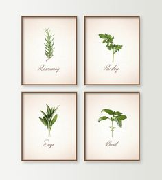 Kitchen Prints - Set of 4 Herbs Kitchen Wall Decor - Dining Room Decor - Culinary - Food Art - Cooking Art - Basil Sage Rosemary Parsley by DaphneGraphics on Etsy https://www.etsy.com/listing/192053428/kitchen-prints-set-of-4-herbs-kitchen