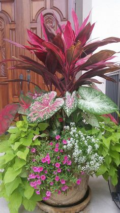 15 fabulous summer container garden flowers ideas 00011 – Welcome Container Flowers, Container Plants, Container Gardening, Outdoor Plants, Potted Plants, Potted Flowers, Patio Plants, Flowers Garden, Garden Pots