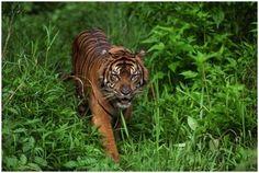 El blog de Judit: algunos animales de la selva