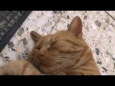 My cat Garfield like sleeps while a handyman works!-Ο γάτος μου Film School, Sheep, Greece, It Works, Cats, Videos, Animals, Greece Country, Gatos