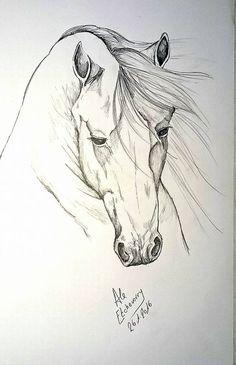 Dibujo a lpiz de caballo mestizo  IMAGENES DE CABALLOS