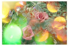 ...rosa antico blur...