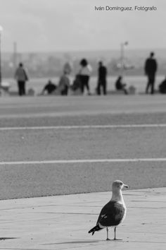 """""""Solitude"""" --  I was having a glass of beer in the Praça do Comercio in Lisbon, when I noticed this seagull, lonely as myself. Together with the people of the background, we became part of a lost group in a wonderful city."""