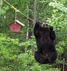 This is why we're supposed to take our bird feeders down before the bears come out of hibernation. One came ambling through just off my back porch while we just sat and watched...hoping the cat was in and not out!