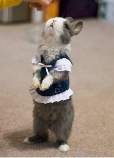 baby animals wearing clothes | Rabbit Wearing Clothes