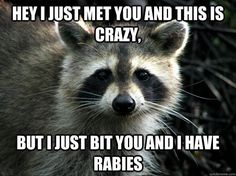 animal memes hey I just met you and this is crazy but i just bit you and i have rabies | hey i just met you and this is crazy but i just bit you and call me ...