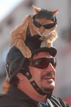 Toby the tabby cat - his biker chick!