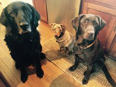 Oakley's family Henri and Maple 2-23-15