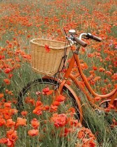 Field of Poppies Orange Aesthetic, Aesthetic Colors, Aesthetic Photo, Aesthetic Pictures, Ed Wallpaper, Orange Wallpaper, Orange You Glad, Orange Is The New, Orange Tapete