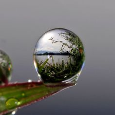 thousands dew into the dew by teguh santosa on 500px