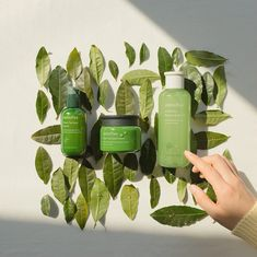 Start a green day with fresh-moist toner? Natural Hair Care, Natural Hair Styles, Short Curly Bob, Innisfree, Korean Makeup, Travel Kits, Bob Styles, Green Day, Liquor