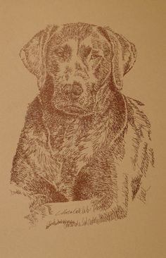 Chocolate Labrador Retriever: Dog Art Portrait by Stephen Kline art drawn entirely from the words Chocolate Labrador Retriever. He also can add your dog's name into the lithograph. - drawdogs.com : drawdogs.com His collectors number in the thousands from over 20 countries and every state in the US. Kline's dog art has generated tens of thousands of dollars for dog rescues worldwide.