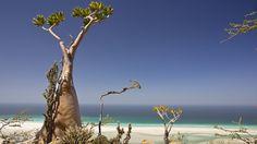 Socotra Archipelago,Yemen,Sony Global - α CLOCK: WORLD TIME, CAPTURED BY α