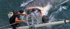jonh williams-tiburón