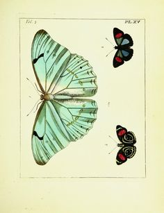 Plates - Illustrations of natural history. - Biodiversity Heritage Library