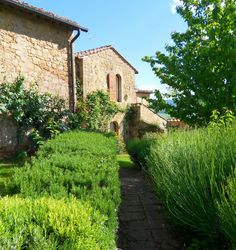 Francesca - Villas in Tuscany | Tuscany Villa Rentals