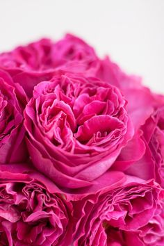 Wedding Wednesday : Flowerona's Guide to David Austin Roses